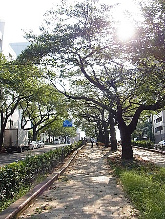 播磨坂さくら並木