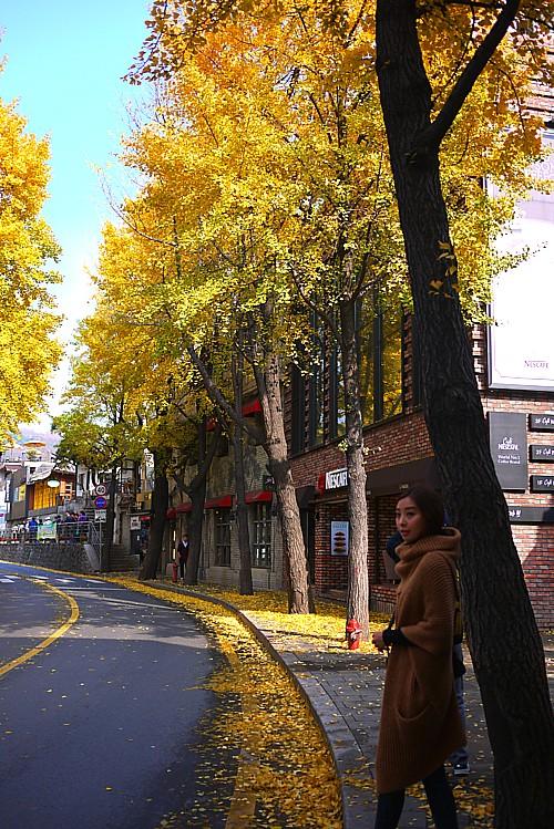 秋がオススメ