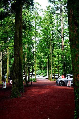 サリョニの森の道
