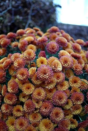 癒される花