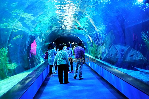 aqua museum korea