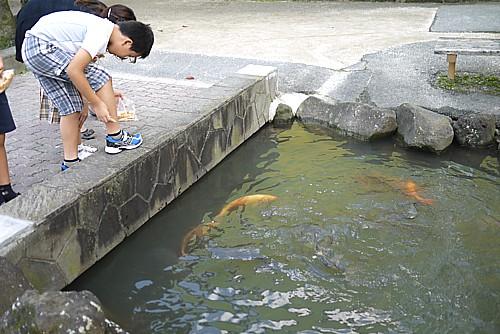 鯉が流れる川