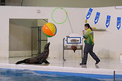 北海道最大の水族館