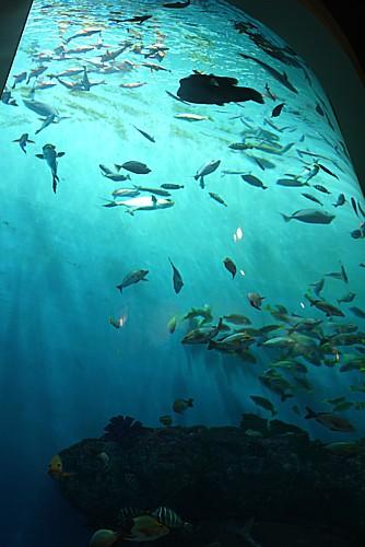 巨大水族館