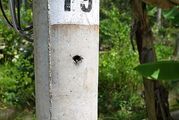ベトナム電柱