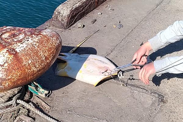 千葉房総の魚影の濃い釣り場紹介