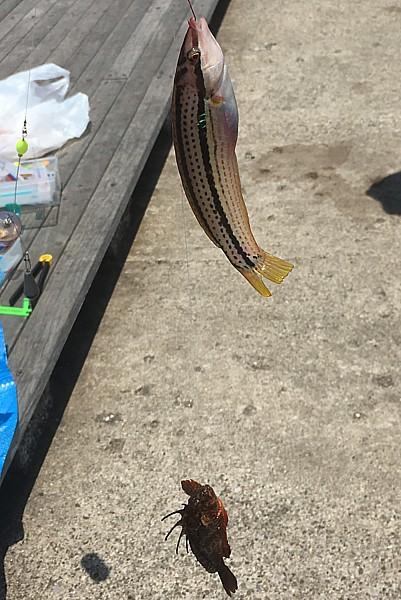 トゲのある魚に刺された