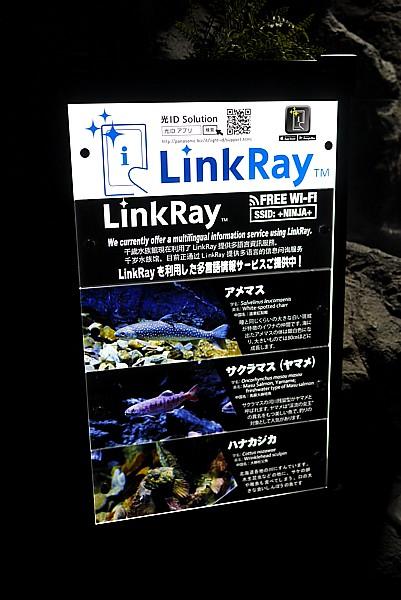 LinkRay